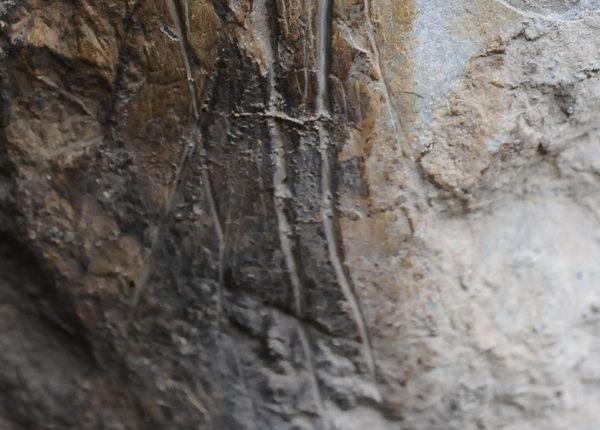 Incisioni lineari Riparo di Borgo Scuro