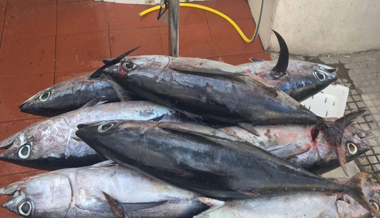pesca Eolie (3)