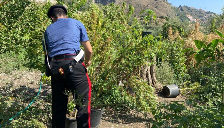 coltivazione Taormina2