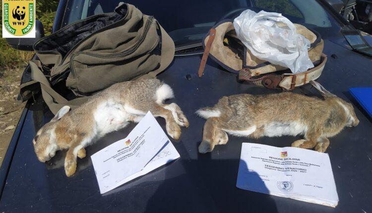 Conigli sequestrati2