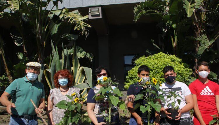 piantati i girasoli della legalità all'istituto fermi-eredia di catania (1)