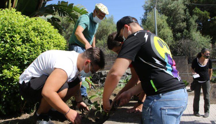 piantati i girasoli della legalità all'istituto fermi-eredia di catania (2)